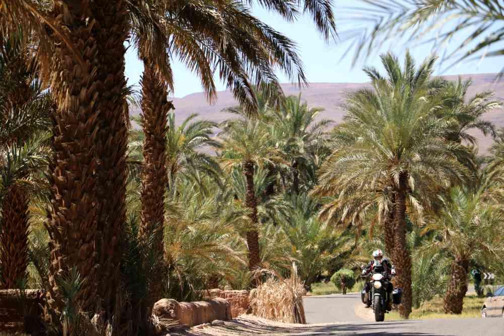 Marocco in moto - palmeto